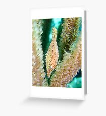 Slender file fish Greeting Card