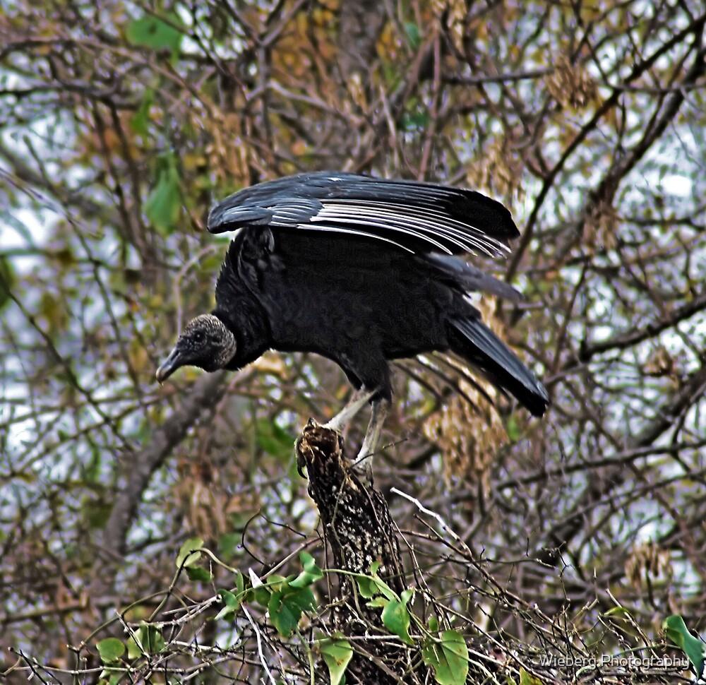 Birds of Prey by Susie Wieberg