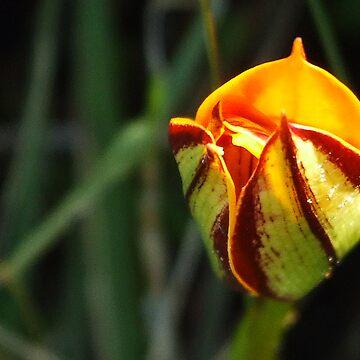 Unusual Flower by HippyDi