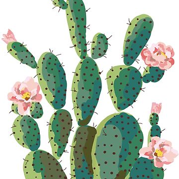 cactus  by nsoumer