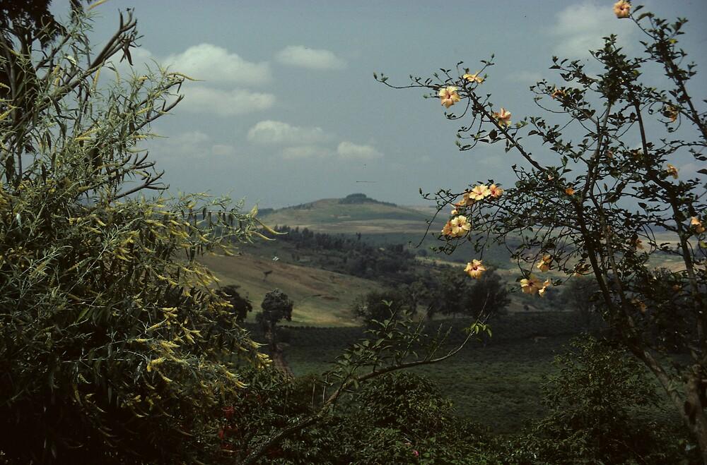 View to Tanzania by bertspix