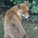 Fox by zaphos