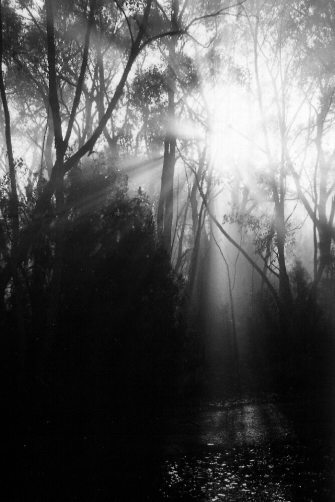 Misty Morning by VickiBee