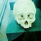 Skull historical Colombian. by ALEJANDRA TRIANA MUÑOZ