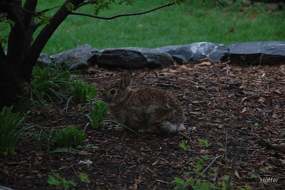 Rabbit by Hoffer
