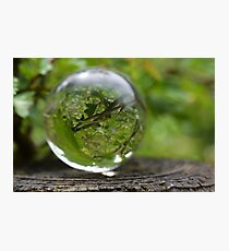 Glass ball - Pippa Collins Photography Photographic Print