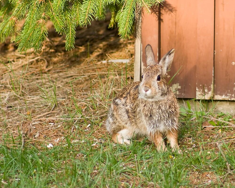 Wild Rabbit by StephenCoyle