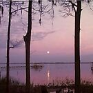 Moon over St John River  by candy