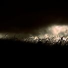 grass by Amagoia  Akarregi