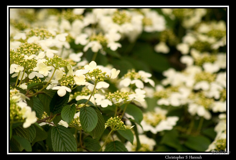 Dogwood by solstone