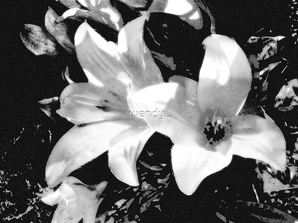 black and white lillies by wendyL