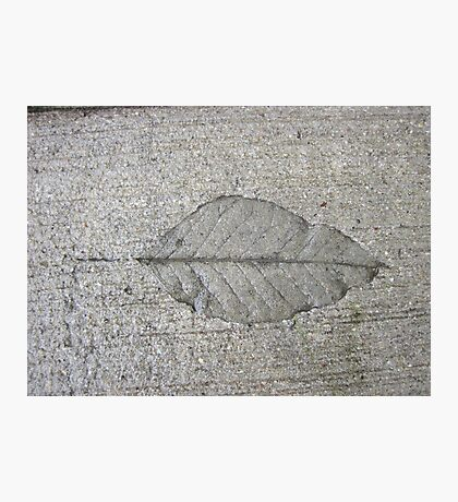 Sidewalk Art by Leaf Photographic Print