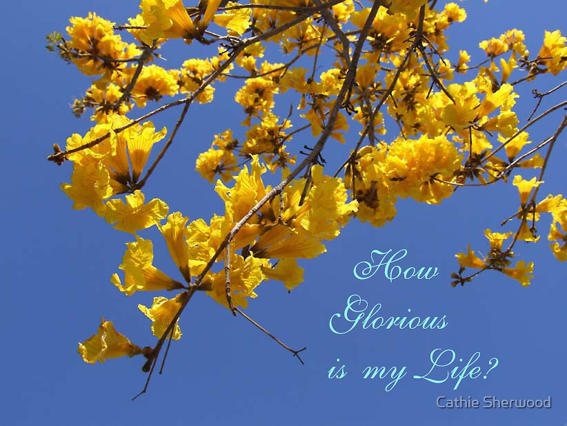 Blue Sky and Yellow Flowers by Cathie Sherwood