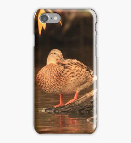 Lake Okauchee Mallard iPhone Case/Skin
