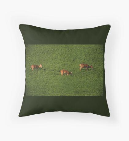 Deer in Bean Field Throw Pillow