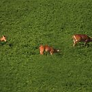 Deer in Bean Field by Thomas Murphy