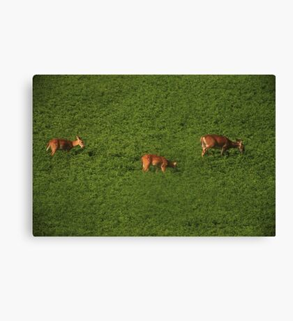 Deer in Bean Field Canvas Print