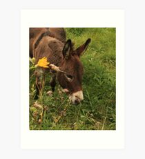 Hot Wheezing Donkey Art Print