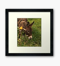 Hot Wheezing Donkey Framed Print