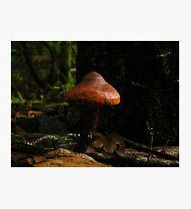 Shroom Photographic Print