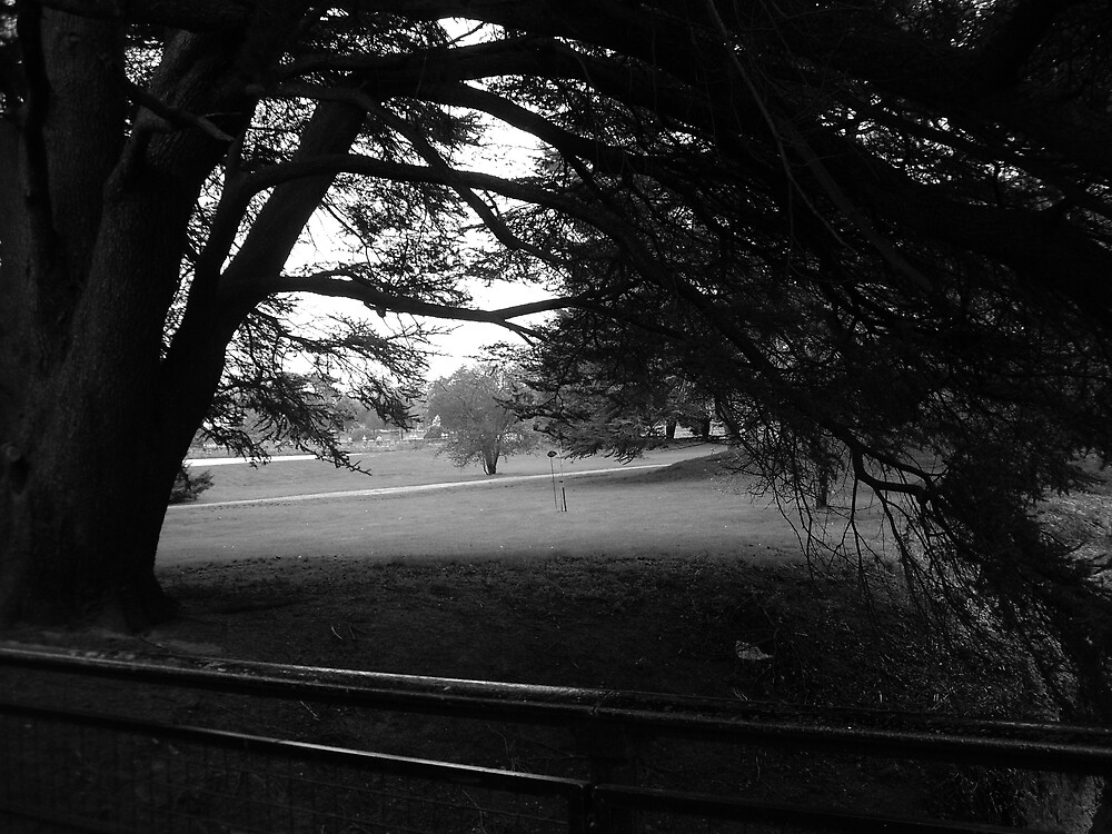 Framed trees by FrancescaLily