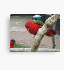 A Perfect Perch - Chattering Lory Canvas Print