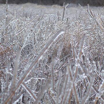 Frozen by jonezy199