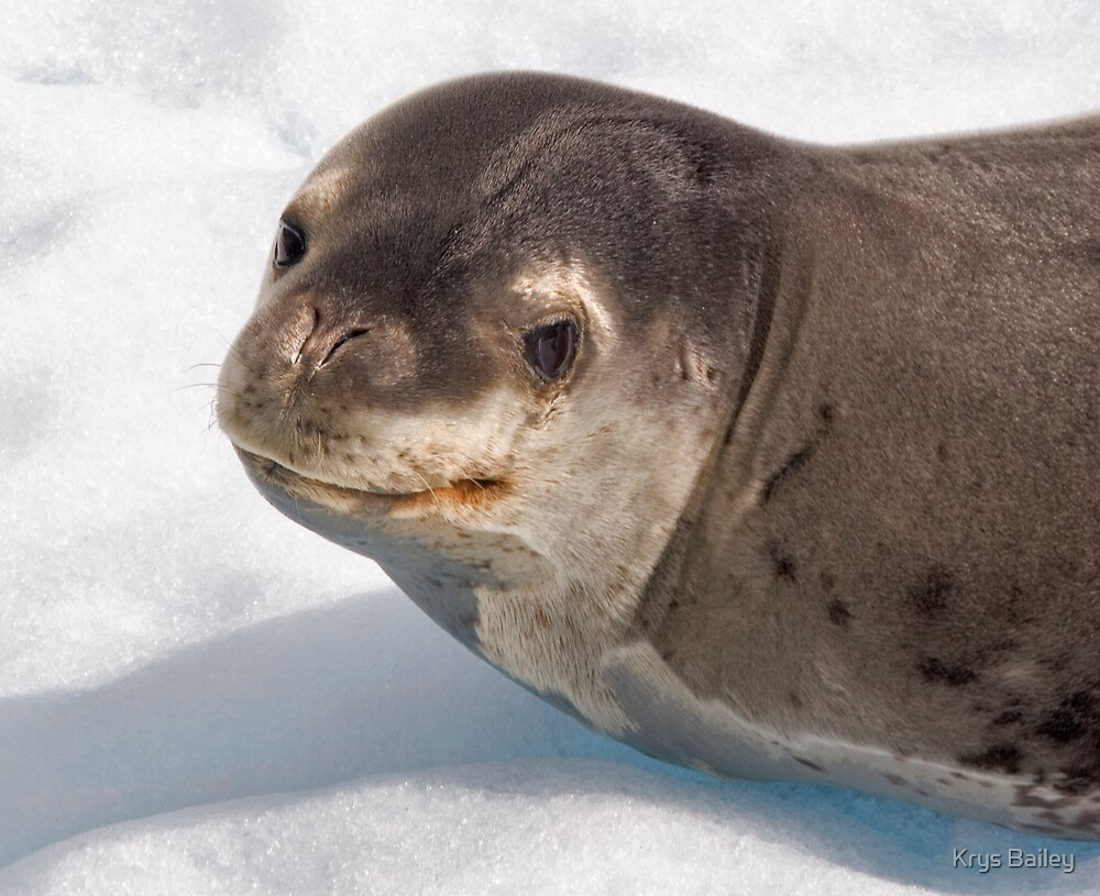 Lost Smiling Seal, Miles from Home by Krys Bailey
