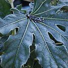 Frosty, Fabulous Leaf by Geraldine Miller