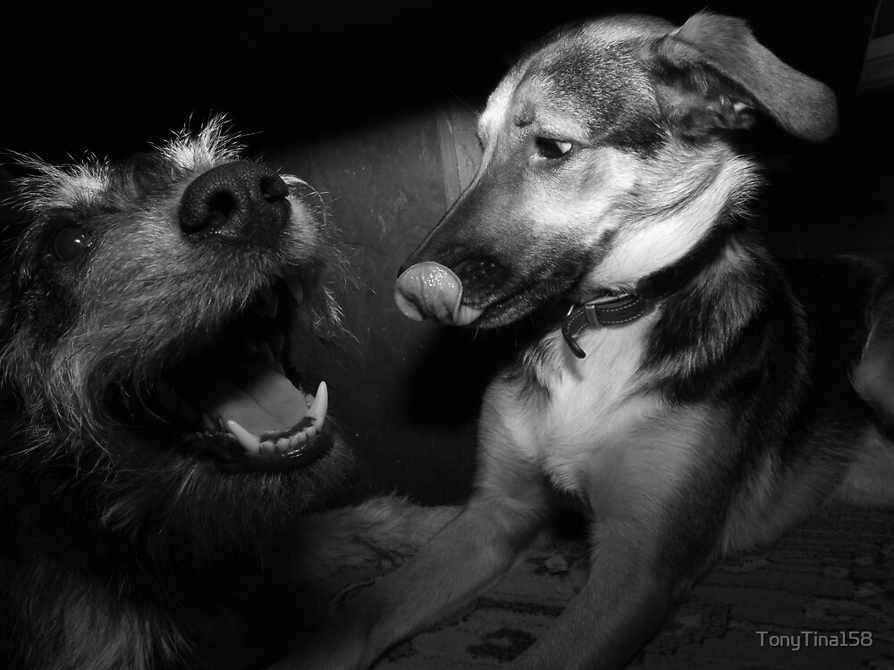Tash & Tyler by TonyTina158