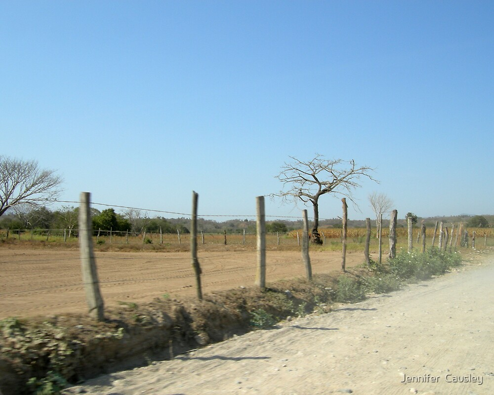 Mexican Road by Jennifer  Causley