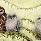 Northern Spotted Owls (Strix occidentalis caurina) by Mariya Olshevska