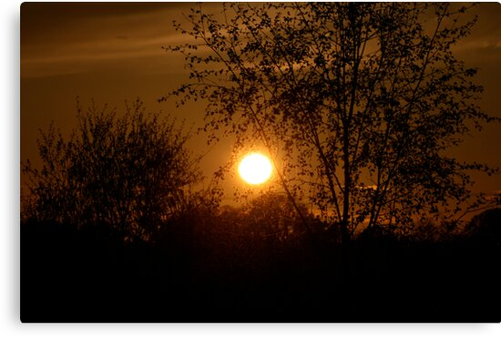Sunset through a tree by Iani