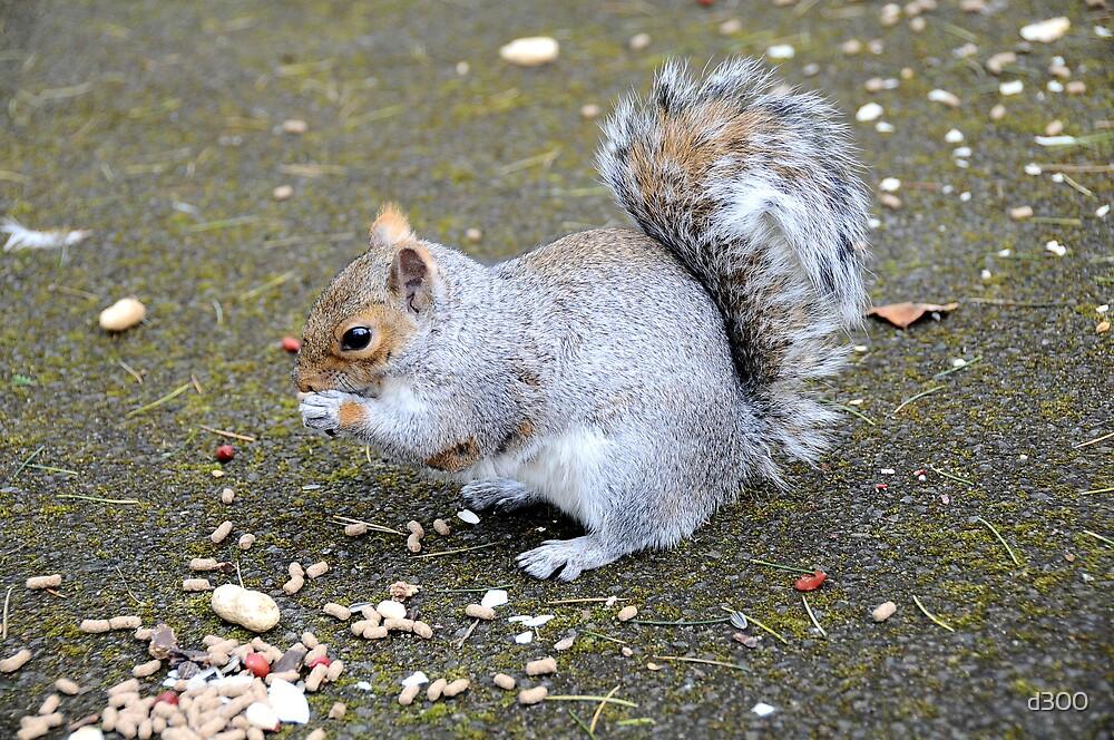 Happy Squirrel by d300