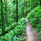 The Wildwood Trail by Jennifer Hartnett-Henderson