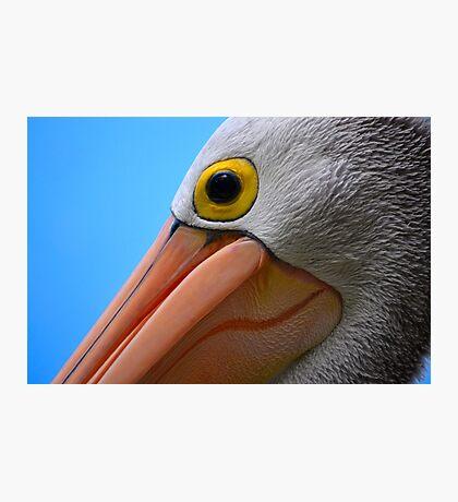 Pelican Close-up Photographic Print