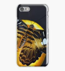 Beautiful butterfly in black, white and orange colors sitting on an orange fruit iPhone Case/Skin
