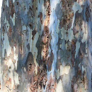 Bark patterns by Scully