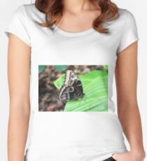 Beautiful butterfly with circles on wings sitting on green leaves  Women's Fitted Scoop T-Shirt