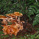 Fungi by Josie Jackson