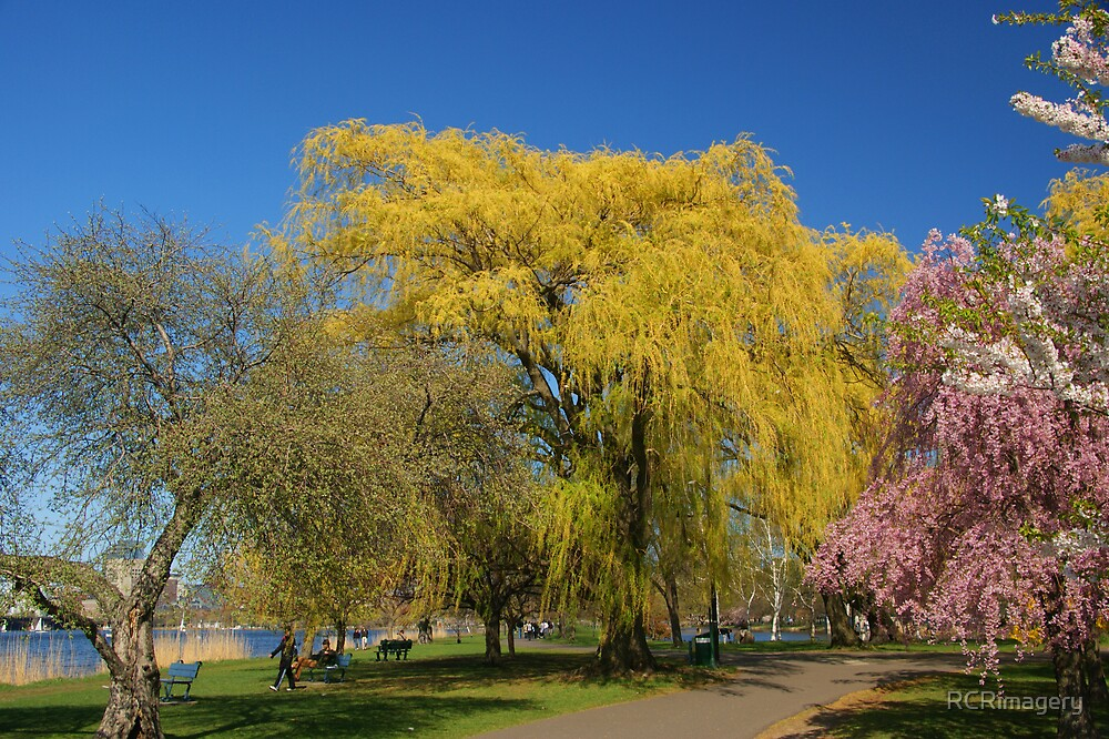 Charles River, Boston, MA by RCRimagery