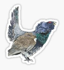 Capercaillie Sticker