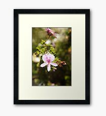 Sweet pink flower photography  Framed Print