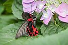 Scarlet Mormon by PhotosByHealy