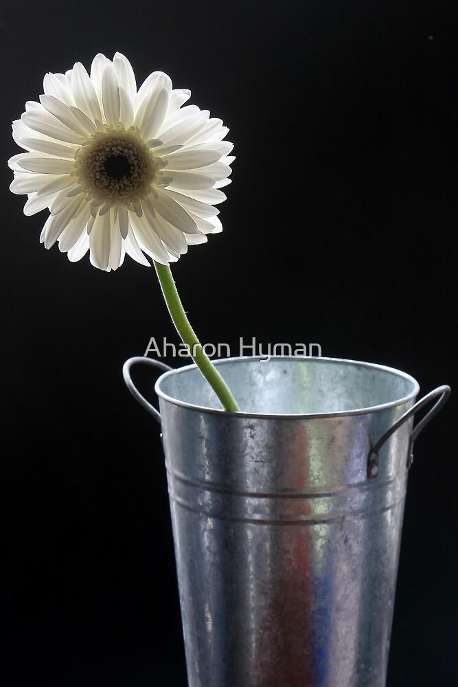 a lone flower by Aharon Hyman
