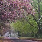 Spring Show - Mt Wilson NSW Australia by Bev Woodman