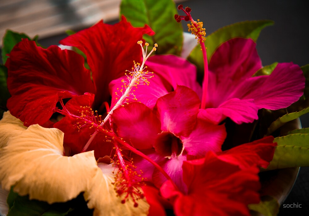 Hibiscus Offerring by sochic