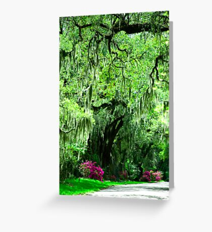 Country Roads © Greeting Card