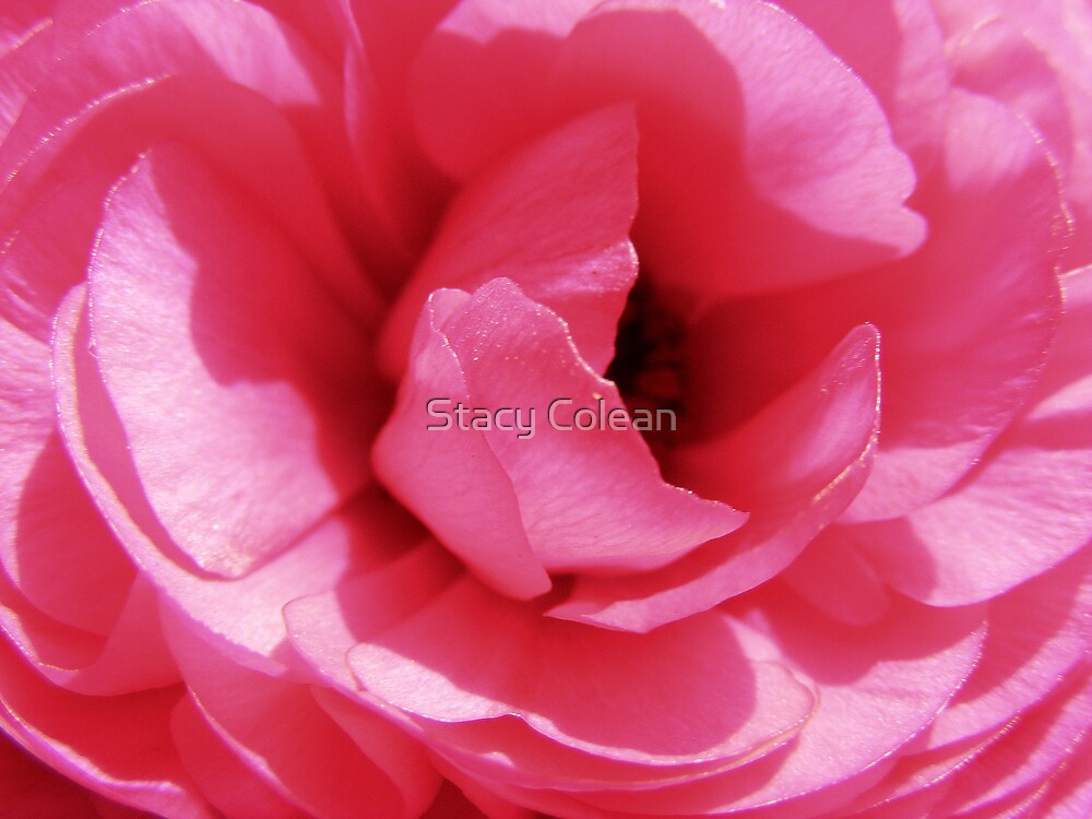 Perfectly Pink by Stacy Colean