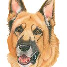 German shepherd - color by doggyshop